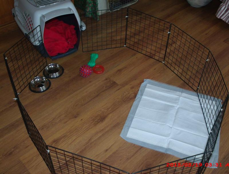 how to get puppy to sleep in crate